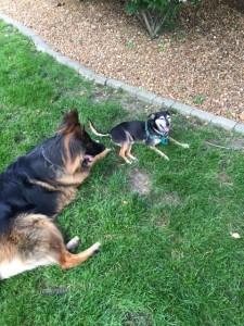 raphaela and twix dogs